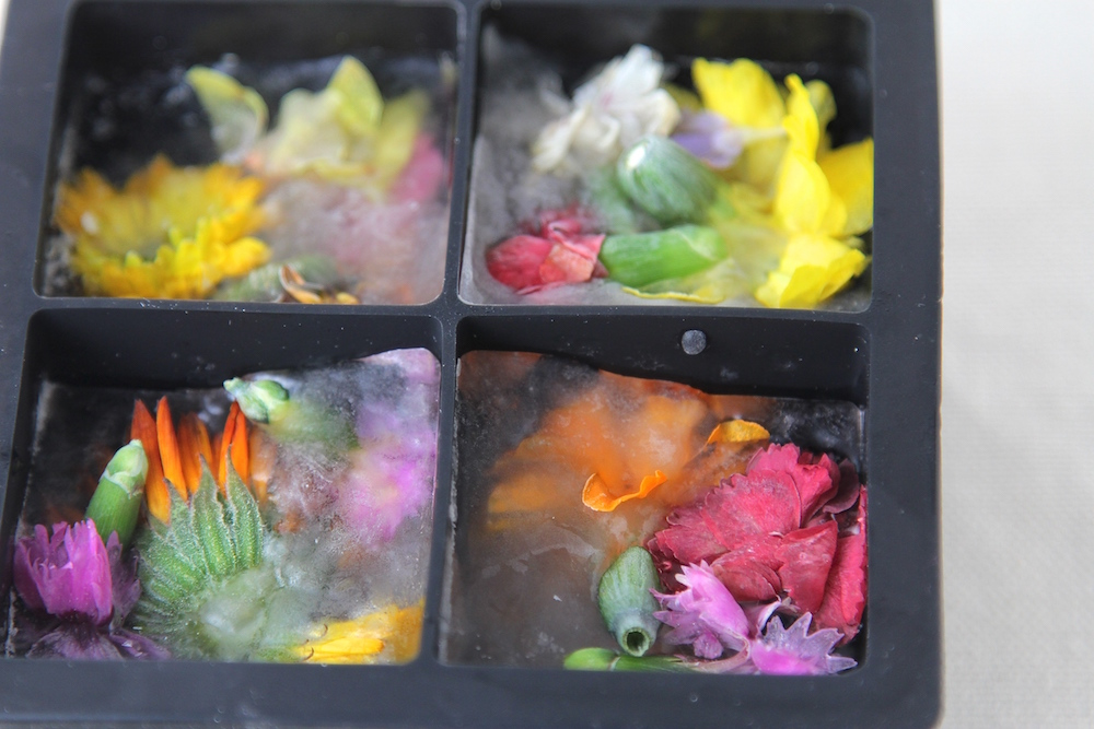 Edible Flower Ice Cubes with Mountain Valley Water
